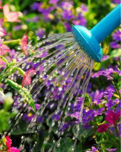 lavage watering photo cropped vertical